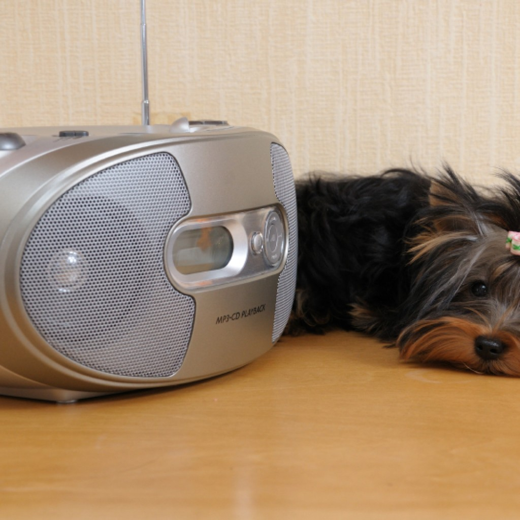 Dog with stereo iStock_000008401959_Small
